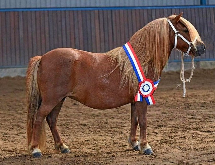 Dagkampioen Gwenn v. Drij Stoel
